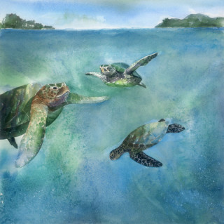 Green Sea Turtles #1 - Janet Payne