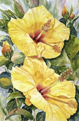 Yellow Hibiscus-Janet Payne.jpg